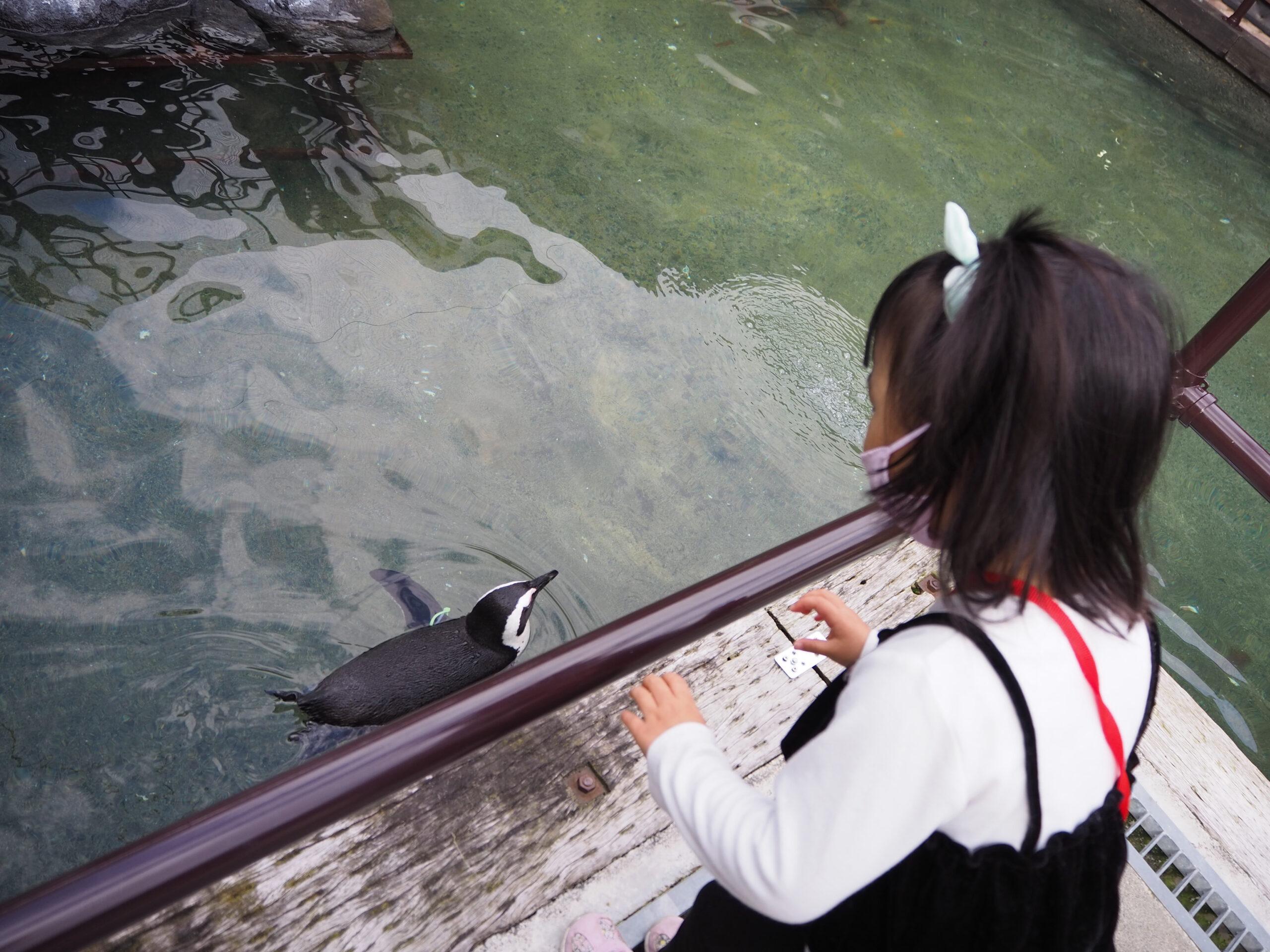 ペンギンを見る女の子